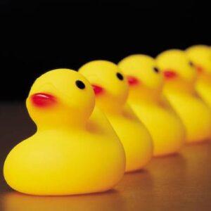 ducks in row